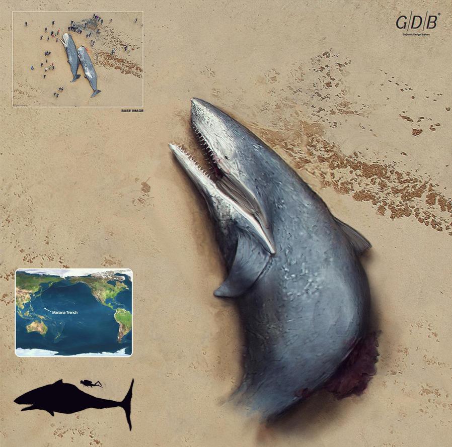 Washed up shark by NenadGojkovic