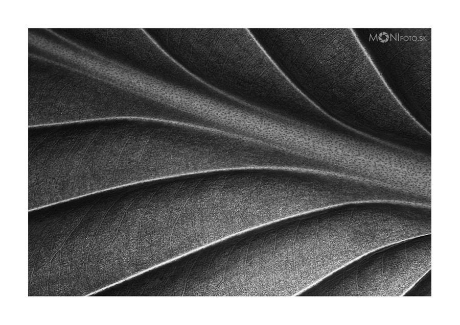 Leaf by shalgona