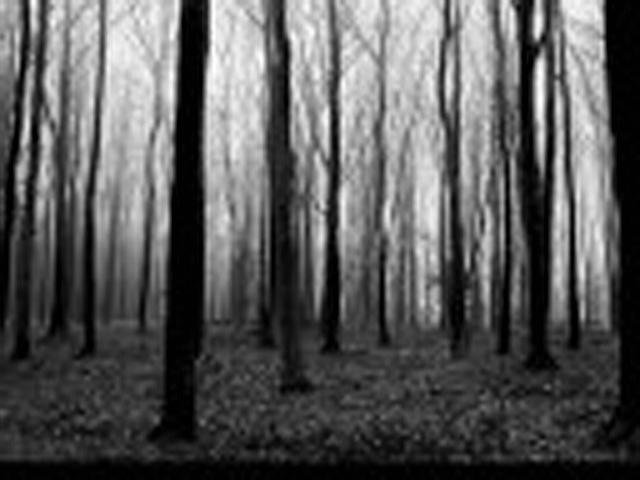 'Lost' Picture by VeggieB0i