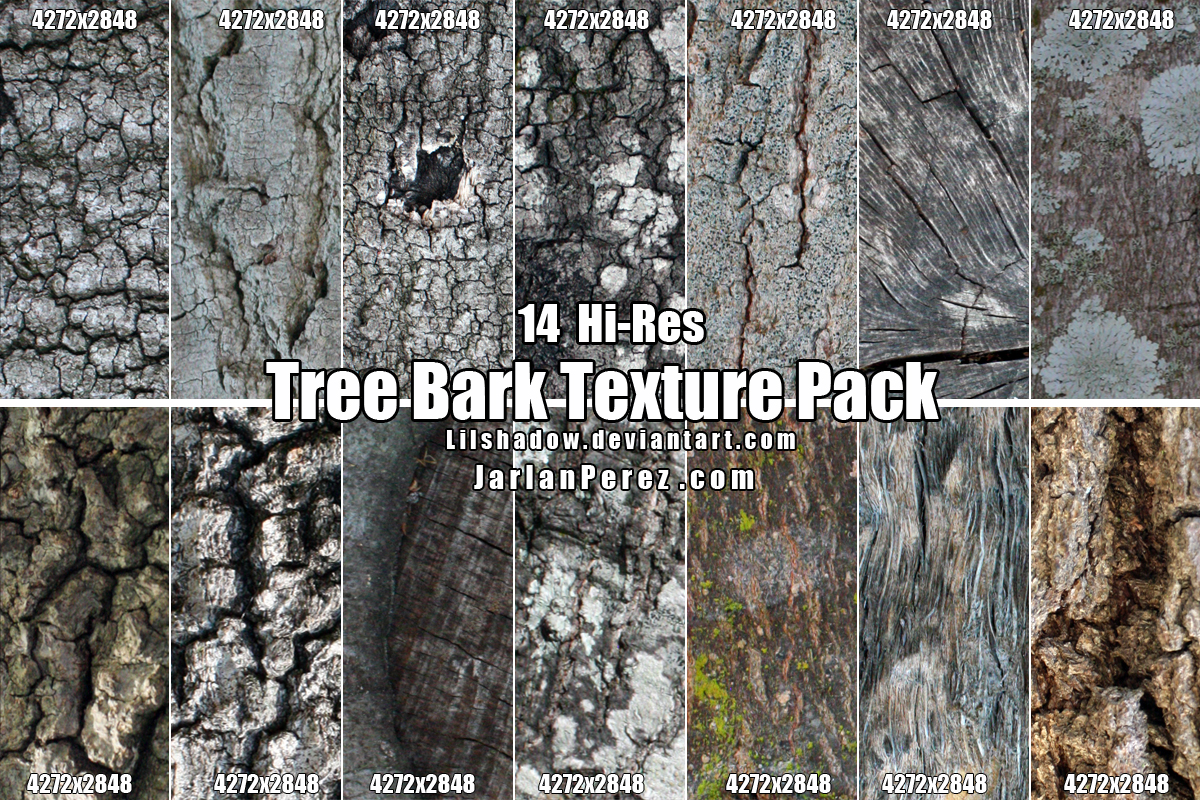 Hi-Res Tree Bark Texture Pack by Lilshadow on DeviantArt Different Types Of Tree Bark