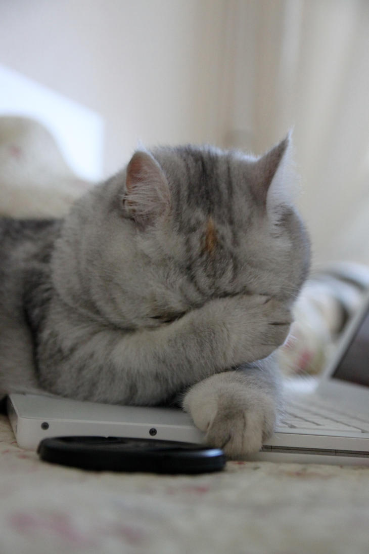 Рукалицо кот
