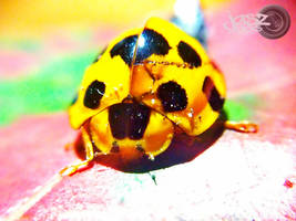 Wounded Lady Bug by iamjasz