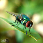 Resting Fly by iamjasz