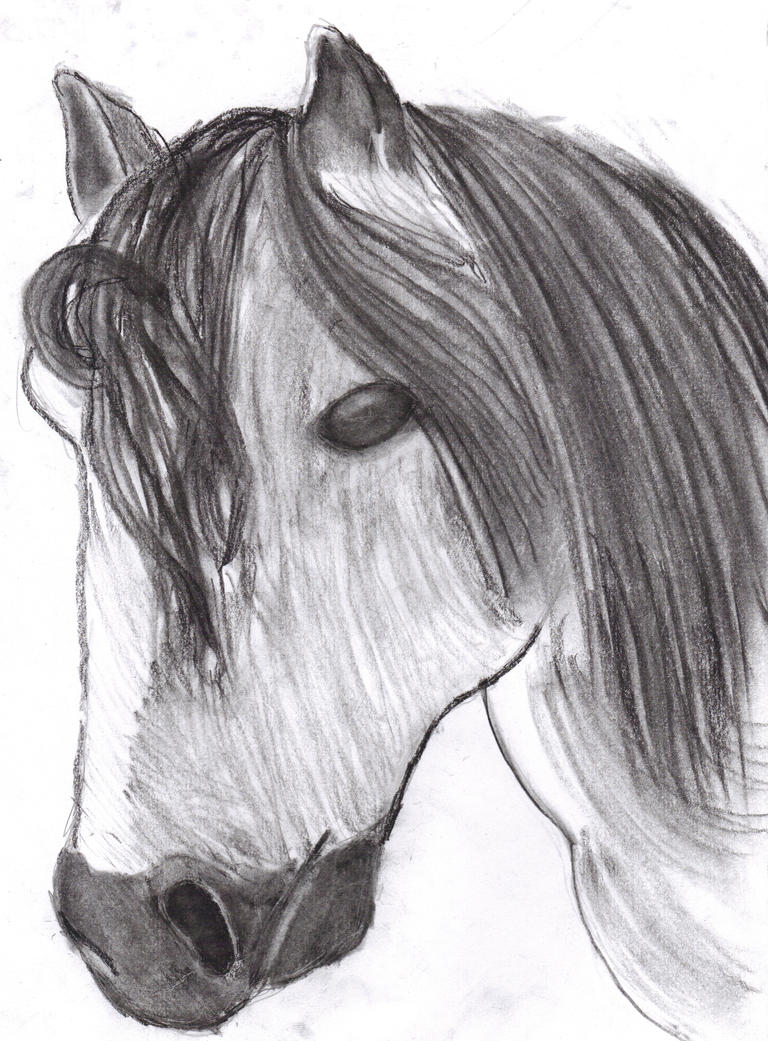horse_charcoal_by_shobonimaster-d3cwvz0.jpg
