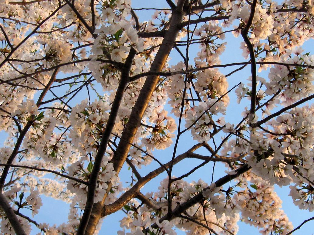 Blossoming by ZebulaNebula