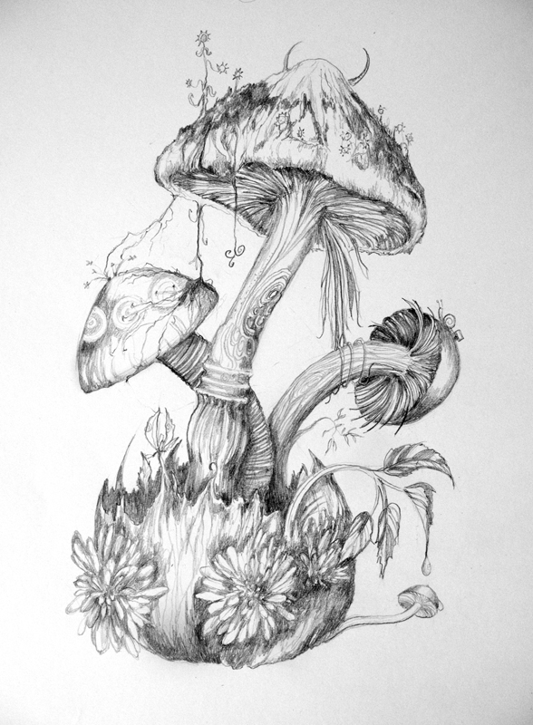 Mushrooms by 6vladimira6 on deviantart for Art drawing ideas for adults