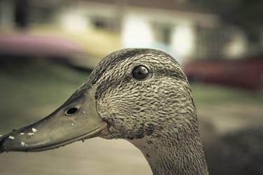 Quack by jaydools