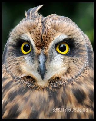 An Owl's Gaze... by SeaSpryte