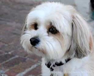 Puppy love by SeaSpryte