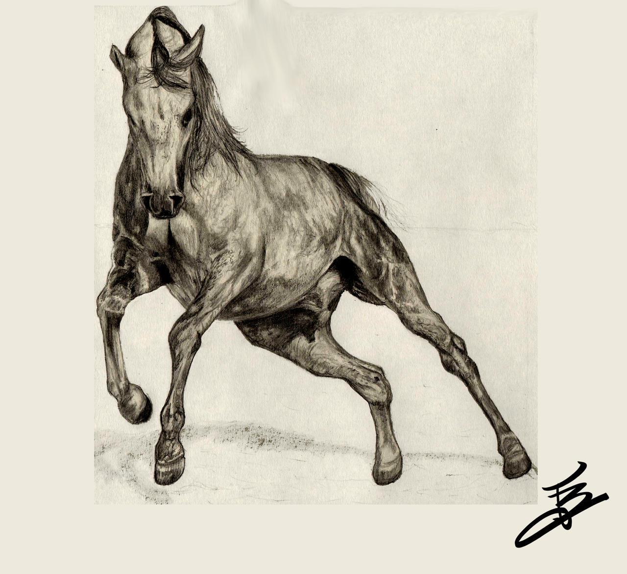 Realistic Horse by lvito00 on DeviantArt