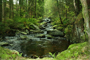 Hidden Forest Pool by Navanna