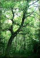The Birch Tree by Navanna