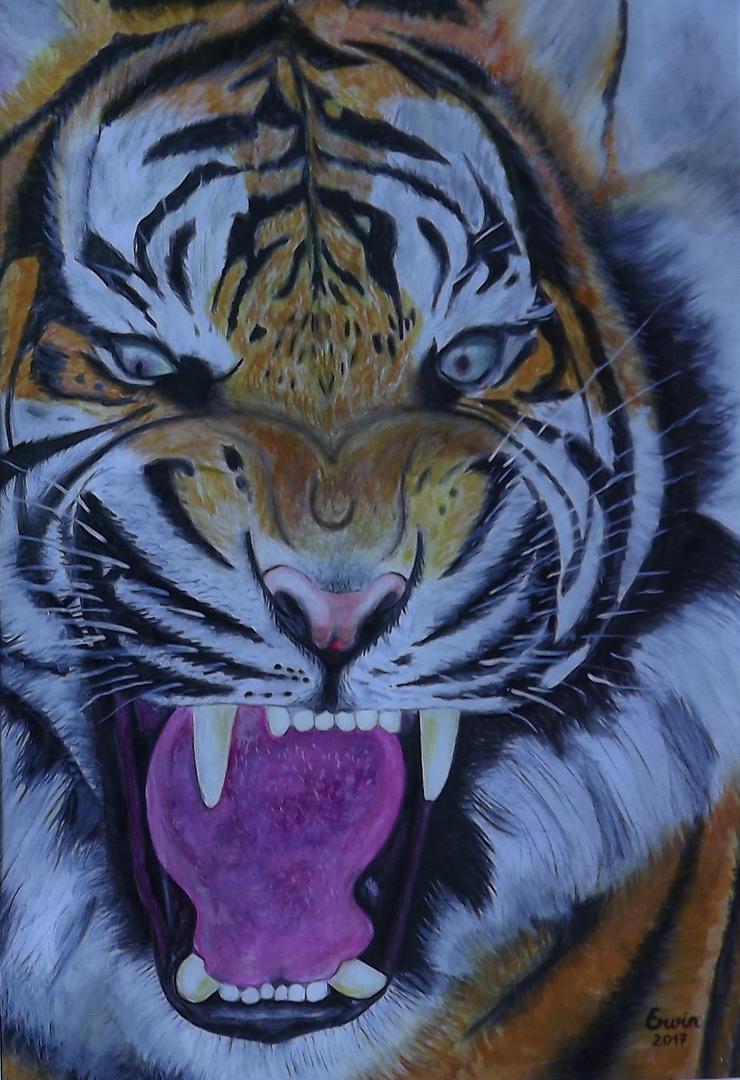 tiger by Mihkel-Ervin