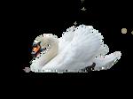 Mute Swan  png