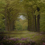 Enchanted Forest 2 Premade Background