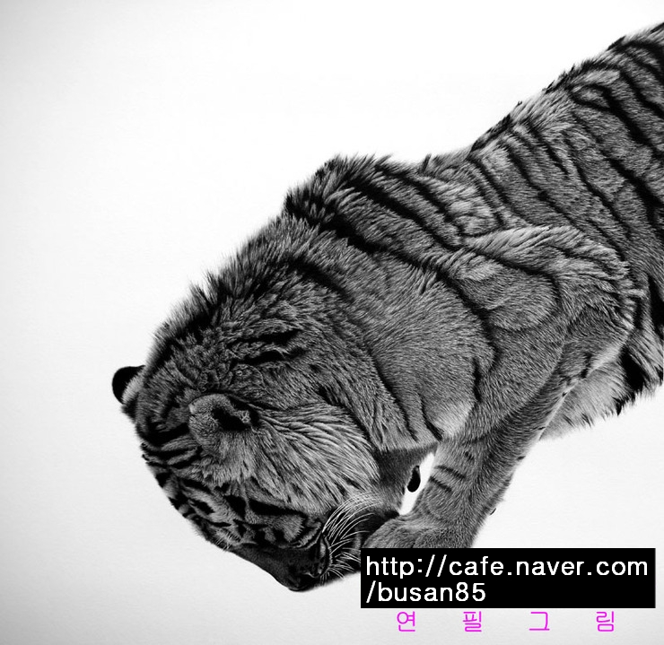 tiger drawing by sharppower