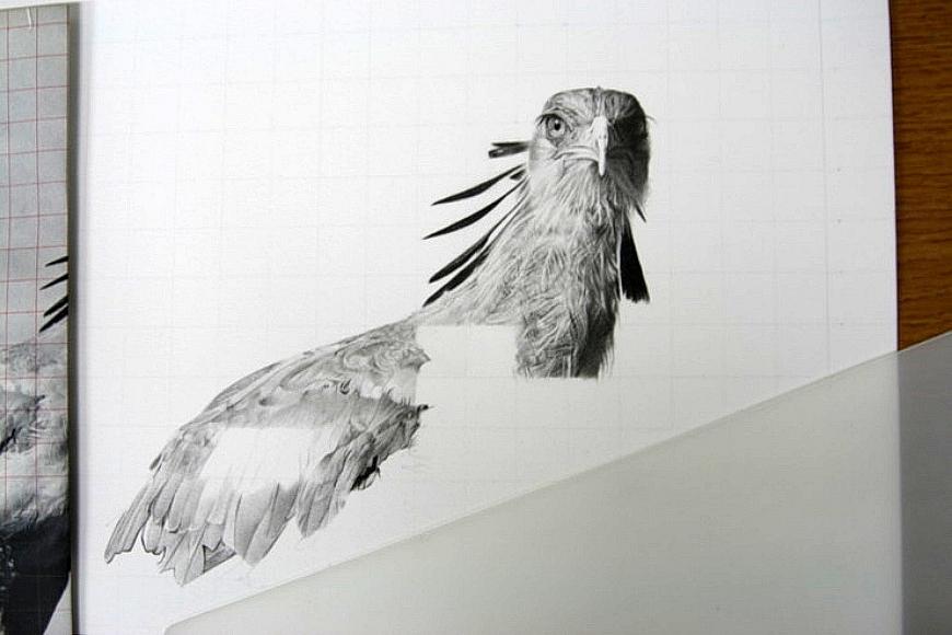 Secretary Bird drawing2 by sharppower