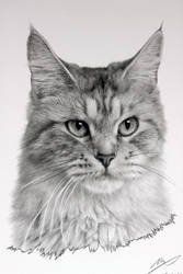 Cat Drawing by sharppower