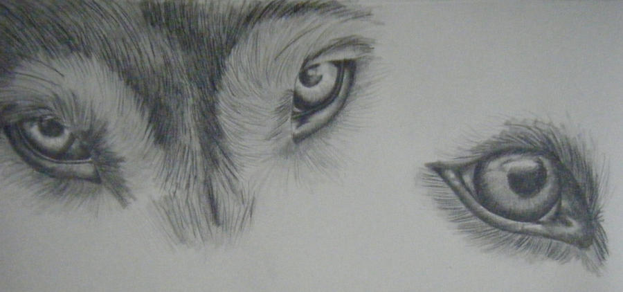 Wolf Eyes by Ragnoria on DeviantArt