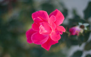 Flower by cjheery