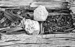Sticks and Stones by cjheery