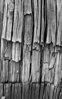 Wood Texture by cjheery
