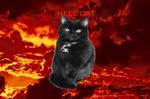 Harley, Hell Cat