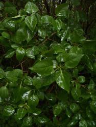 Leaves 1.