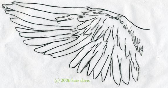 Peregrine Falcon Sketch Peregrine Falcon Wing Sketch