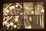 Last Photograms