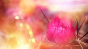 Blooming Brightness