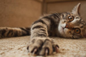 Wild/pet cat by Makarova17