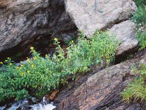 Flowery Waterfall