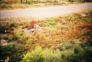 Utah Grass