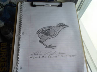 Wyandotte chick by The1Zenith