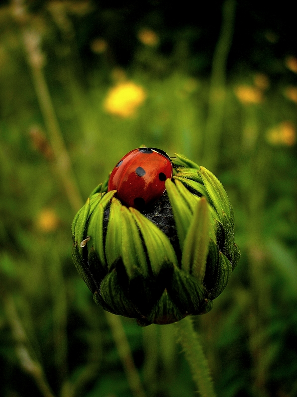 Lost Ladybird by erlebnis
