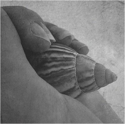 I've hidden you in my hand... by erlebnis