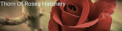 hatchery_banner_by_minseok1243-dbadxbe.jpg