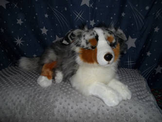 Large Australian shepherd plush by IAmRevlisFlow