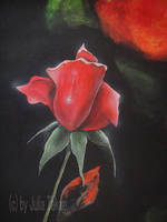 a rose or... by martoo1973