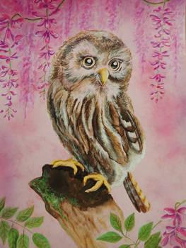 Owlwystheriasml