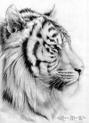 Tiger by RavenMadwolf