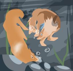 {Toko} Diving | Payment | desertfloraa 4 by Rocheryn