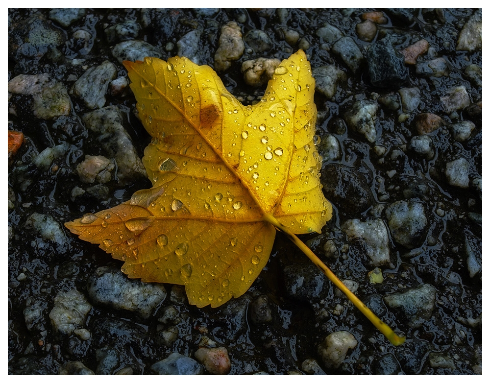 Golden death by petteram