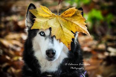 Hatchi **Autumn** by slyzzik