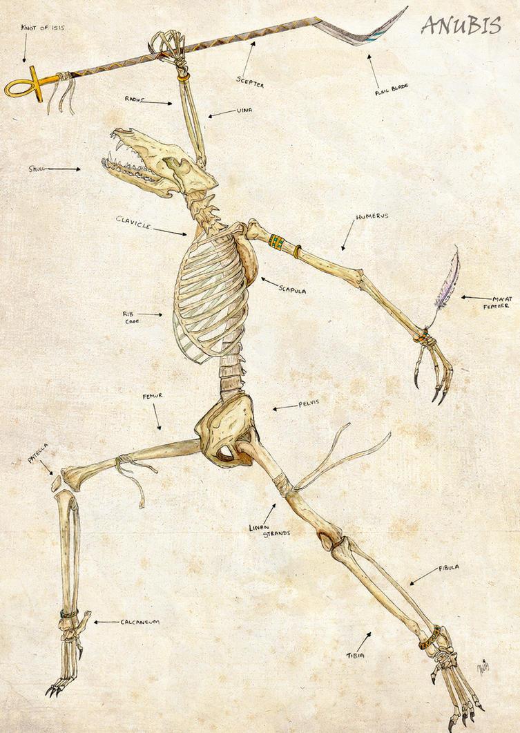 Anubis anatomy by Soul-Illustration on DeviantArt