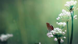 Butterfly by RecluseKC