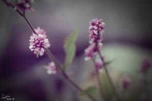 Flower by RecluseKC