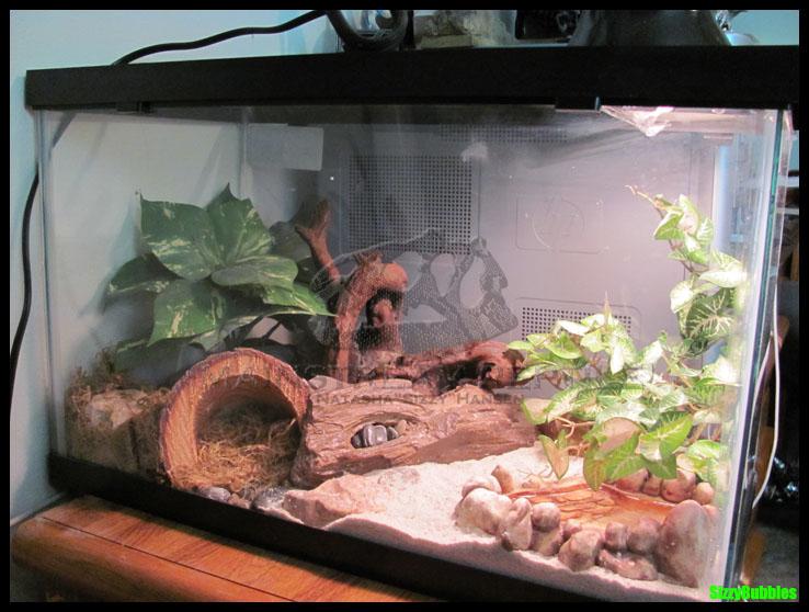 Leopard Gecko Terrarium By SizzyBubbles On DeviantArt