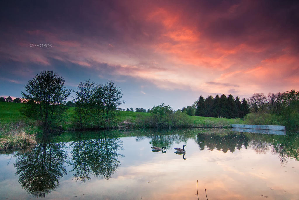 Peaceful Swim by Jenova-89